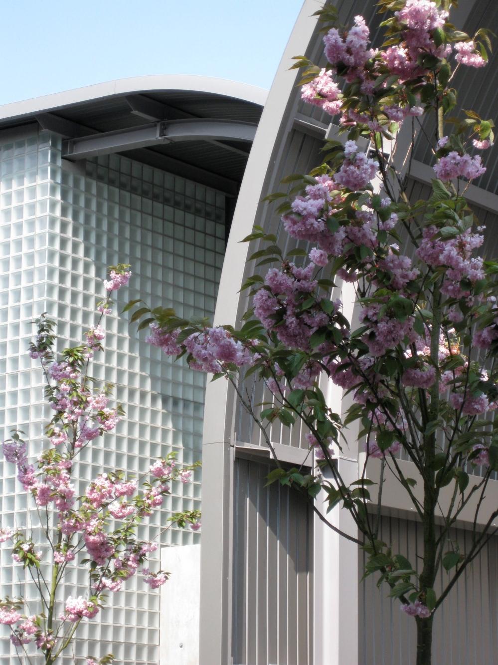 *detail gevel met bloesem buitenterrein Bijen 21
